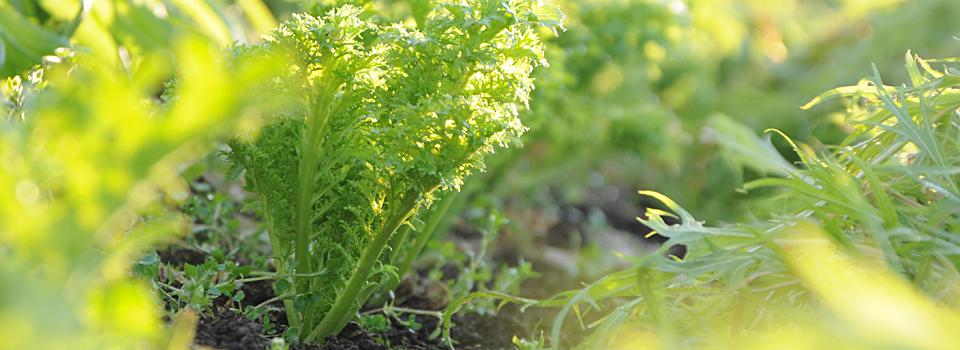 ポム・ド・テール – 自然なやさいの種まく八百屋 –